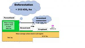 Stocks moyens de carbone par hectare dans les biomasses et dans la matière organique des sols, des forêts, des prairies et des cultures en France (Riedacker 2008 a). Les apports d'engrais de champs de blé bien fertilisés généraient environ 2,7 t de CO2e par ha (petite bulle à droite) en 2000 contre 0,7 tCO2e en 1950, mais pour des rendements alors quatre fois moindre qu'en 2000. Un défrichement moyen, (½ de prairie et ½ de forêt) émet environ 200 t de CO2, cent fois plus que l'augmentation de l'apport apport annuel d'engrais pour doubler les rendements. Mais comme les émissions des apports d'engrais ne se produisent qu'année après année, alors que celles des défrichements ont lieu dès la première année, il est plus avantageux pour le climat d'apporter des engrais au moins pendant deux siècles. Cela permet en outre de préserver la production de bois/fourrage et les services environnementaux des surfaces non défrichées (cf. Fig.3).